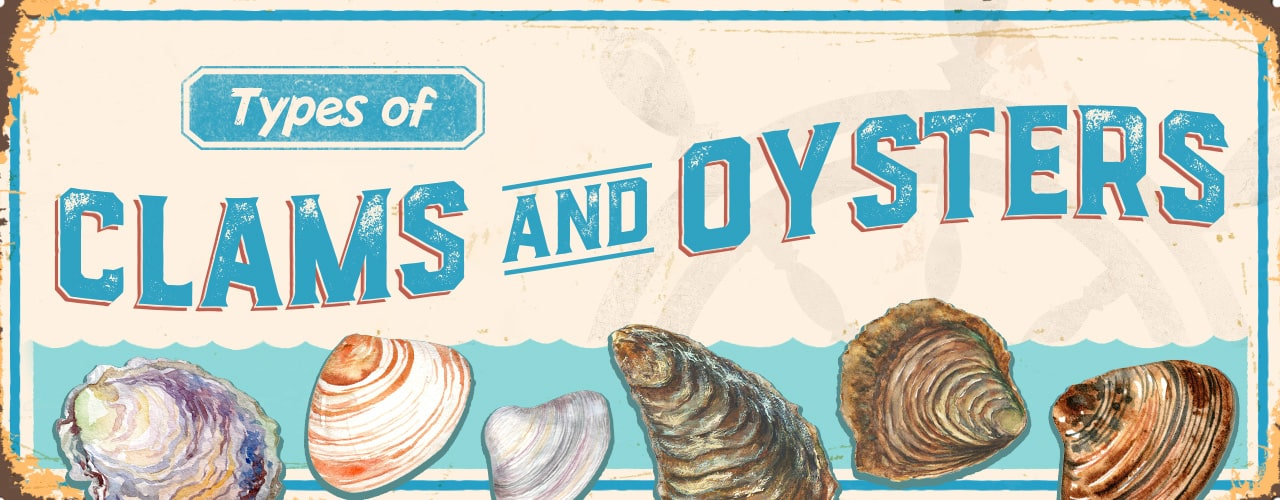 Types of Clams and Oysters