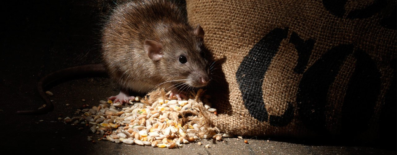 Restaurant Pest Control Tips