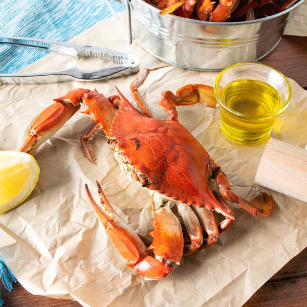 """Linton's Seafood 5 3/4"""" Live Large Maryland Blue Crabs - 72/Case"""