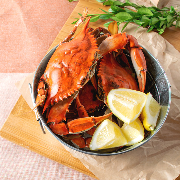 "Linton's Seafood 5 1/4"" Live Medium Maryland Blue Crabs - 12/Case"