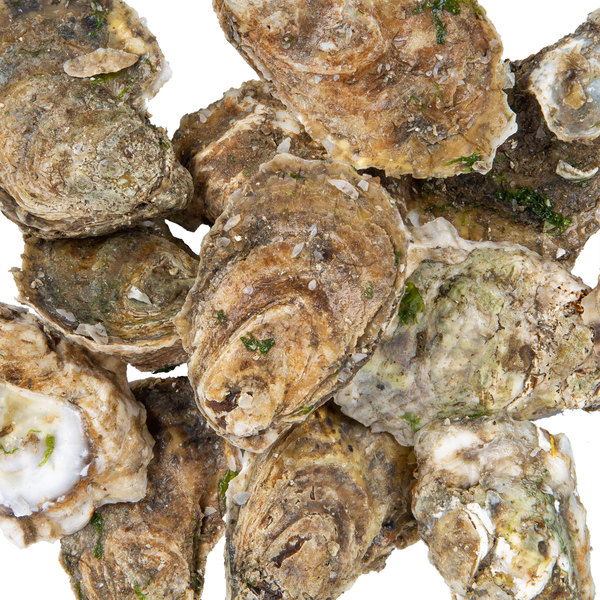 Linton's Seafood Live Oysters in the Shell - 50/Case