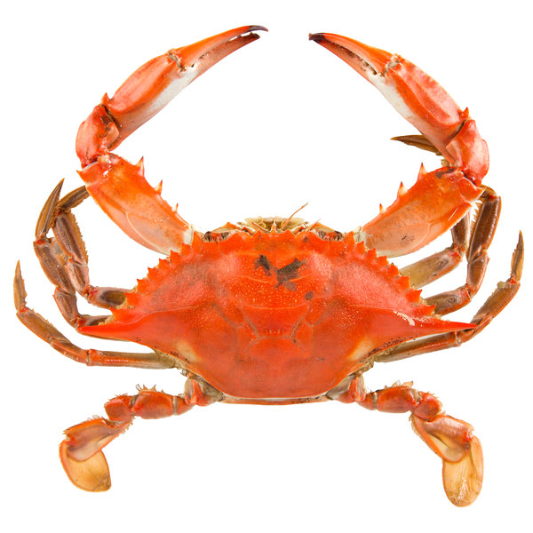 Linton's Seafood 5 3/4 inch Non-Seasoned Steamed Large Maryland Blue Crabs - 12/Case