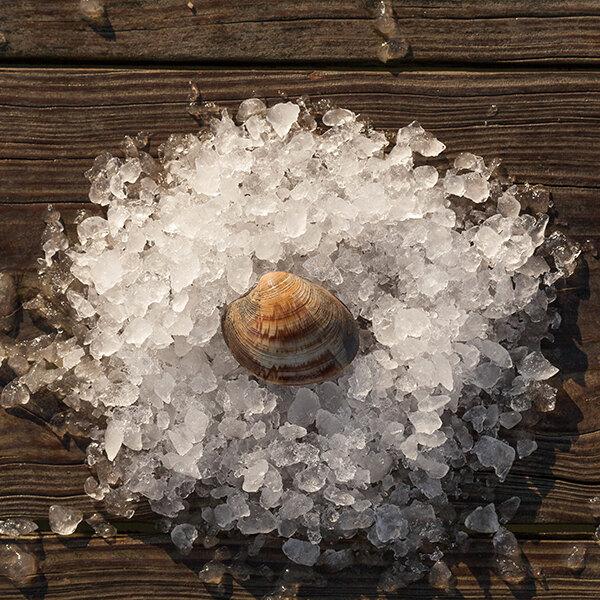 Rappahannock Oyster Co. 50 Count Live Olde Salt Littleneck Clams