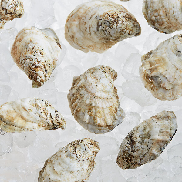Rappahannock Oyster Co. 100 Count Live Rappahannock River Oysters