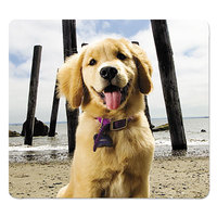 Fellowes 5916401 Puppy At Beach Recycled Mouse Pad