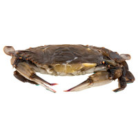 Linton's Seafood 5 1/4 inch Prime Soft Shell Blue Crabs - 6/Case