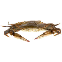 Linton's Seafood 4 1/4 inch Hotel Soft Shell Blue Crabs - 6/Case