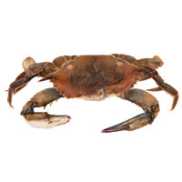 Linton's Seafood 6 1/2 inch Whale Soft Shell Crabs - 6/Case