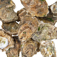 Linton's Live Oysters in the Shell - 100/Case