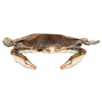Linton's Seafood 5 3/4 inch Jumbo Soft Shell Blue Crabs - 6/Case