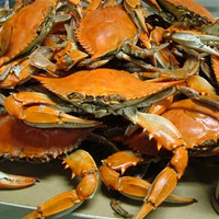 Linton's Seafood 5 1/4 inch Heavily Seasoned Steamed Medium Maryland Blue Crabs - 42/Case