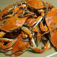 Linton's Seafood 6 1/2 inch Medium Seasoned Steamed Jumbo Maryland Blue Crabs - 30/Case