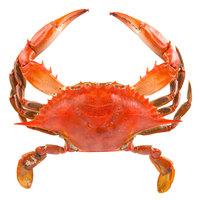 Linton's 5 1/4 inch Non-Seasoned Steamed Medium Maryland Blue Crabs - 12/Case