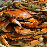 Linton's Seafood 5 3/4 inch Heavily Seasoned Steamed Large Maryland Blue Crabs - 72/Case