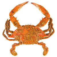 Linton's Seafood 6 1/2 inch Heavily Seasoned Steamed Jumbo Maryland Blue Crabs - 12/Case