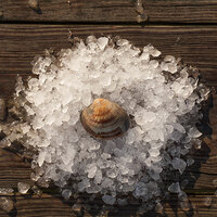 Rappahannock Oyster Co. 200 Count Live Olde Salt Littleneck Clams