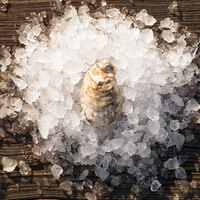 Rappahannock Oyster Co. 50 Count Live Rappahannock River Oysters