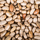 Regal Foods Organic Dried Pinto Beans - 5 lb.