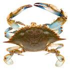 Linton's Seafood 6 1/2