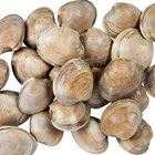 Linton's Seafood Hard Shell Little Neck Live Clams - 50/Case
