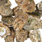 Linton's Seafood Live Oysters in the Shell   - 100/Case