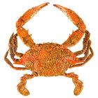 Linton's 6 1/2 inch Heavily Seasoned Steamed Jumbo Maryland Blue Crabs - 12/Case