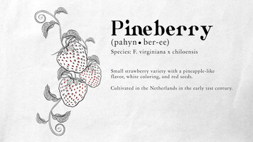 Monin Pineberry Syrup