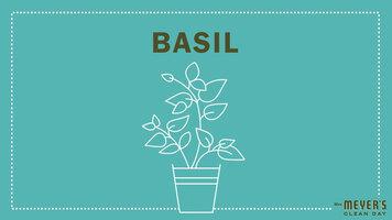 Mrs. Meyer's Garden-Inspired Scents: Basil
