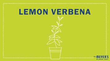 Mrs. Meyer's Garden-Inspired Scents: Lemon Verbana