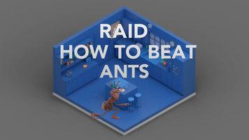 Raid: How to Beat Ants