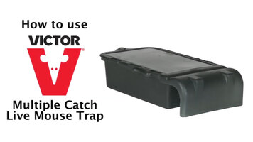 Victor Multiple Catch Mouse Trap Instructional Video