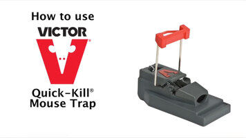 How to Set & Place a Victor Quick-Kill Mouse Trap