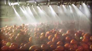 Escalon: Escalon's Process Yields a Better Tomato