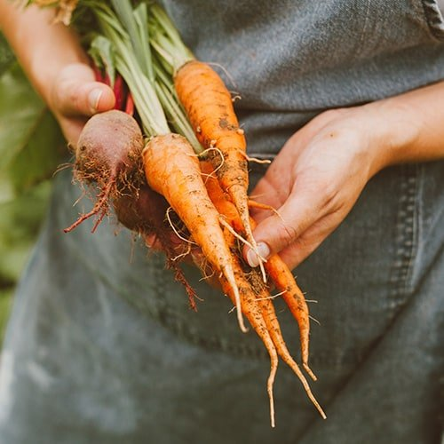Why Farm To Table Sustainability Is Important Webstaurantstore Blog