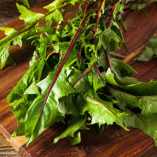 raw organic red dandelion greens