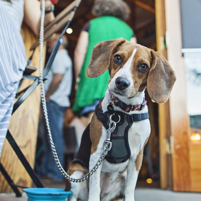 pros and cons of dog-friendly restaurants